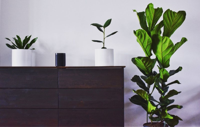Biophilia Décor - All You Need  To Simply Transform Your Living Room! 🌿 living room Biophilia Décor – All You Need  To Simply Transform Your Living Room! 🌿 Biophilia d  cor All you need to simply transform your living room      4