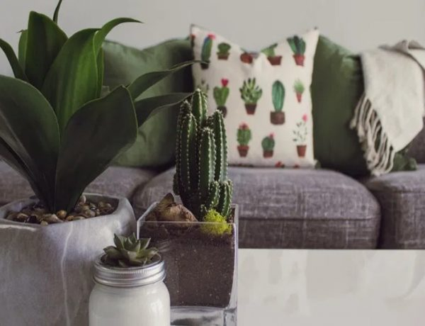 Biophilia décor - All you need to simply transform your living room! 🌿 cover living room Biophilia Décor – All You Need  To Simply Transform Your Living Room! 🌿 Biophilia d  cor All you need to simply transform your living room      cover 600x460